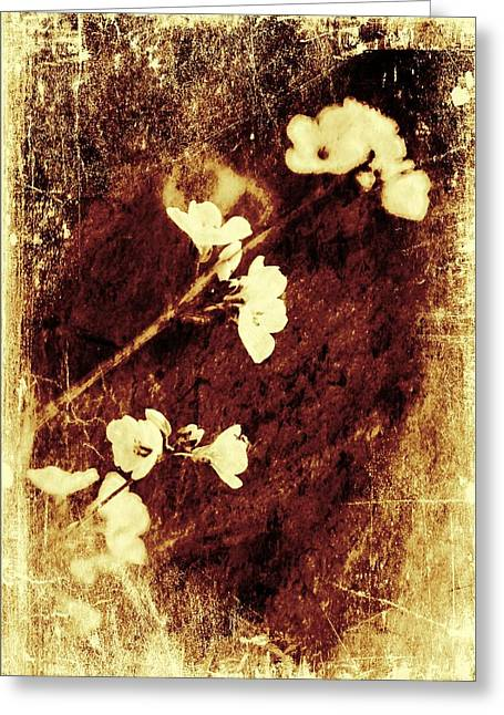 Abstract Style Greeting Cards - Vintage flower Greeting Card by Jaroslaw Grudzinski