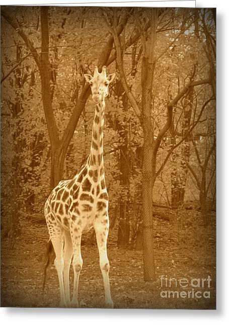 Vintage Giraffe Greeting Card by Avis  Noelle