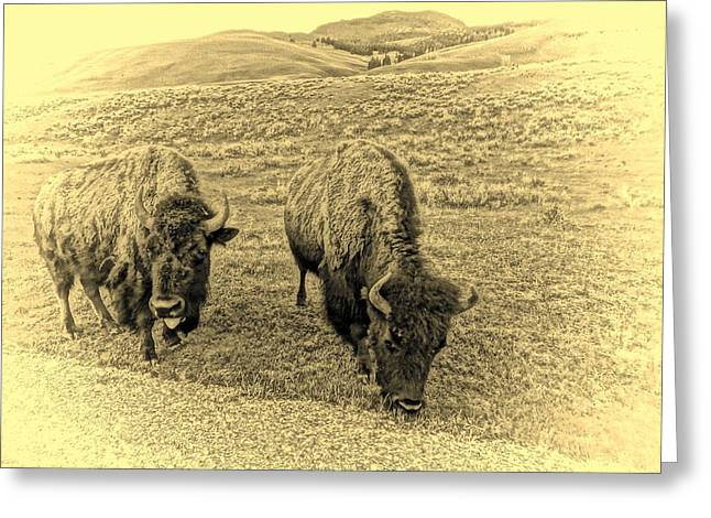 The American Buffalo Greeting Cards - Vintage Great Buffalo On The Plains Greeting Card by Dan Sproul
