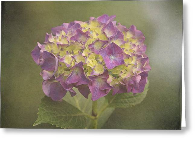 Enhanced Greeting Cards - Vintage Hydrangea Greeting Card by Angie Vogel