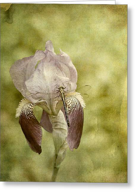 Vintage Iris And Dragonfly Greeting Card by Jai Johnson