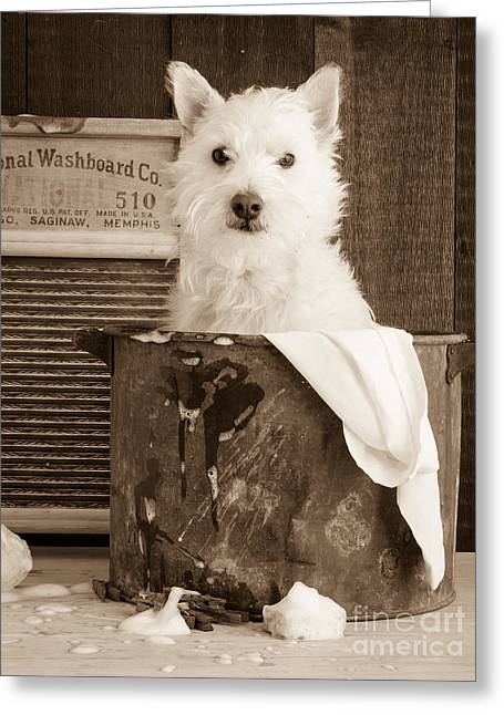 Westie Greeting Cards - Vintage Laundry Greeting Card by Edward Fielding