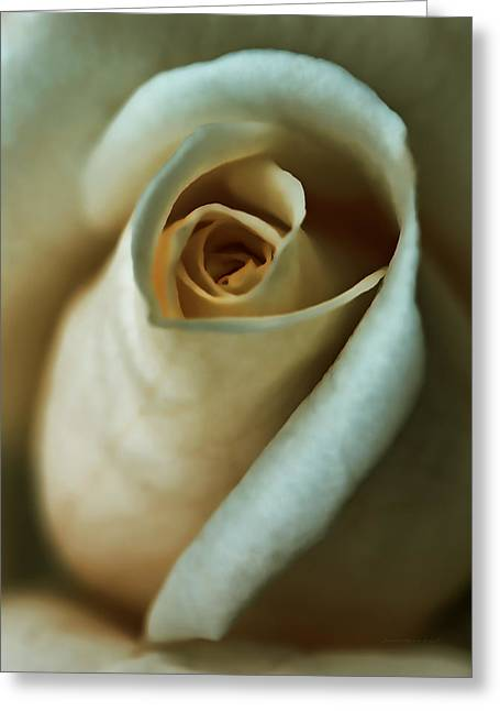 Light Peach Greeting Cards - Vintage Macro Rose FLower Greeting Card by Jennie Marie Schell