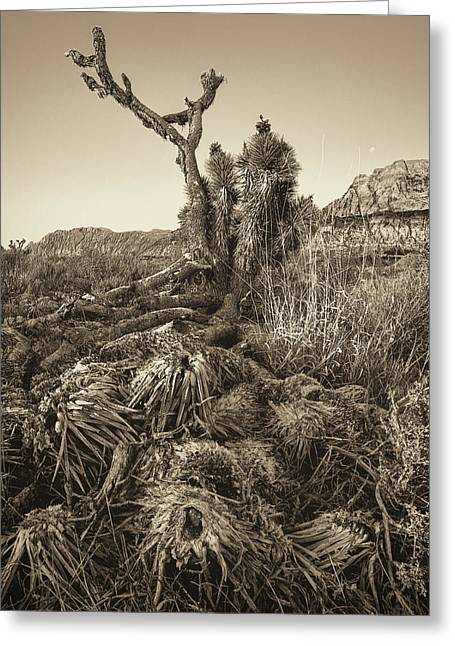 Mountain Valley Greeting Cards - Vintage Old Joshua Tree Roots Greeting Card by Susan  Schmitz