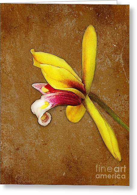 Judi Bagwell Greeting Cards - Vintage Orchid Greeting Card by Judi Bagwell