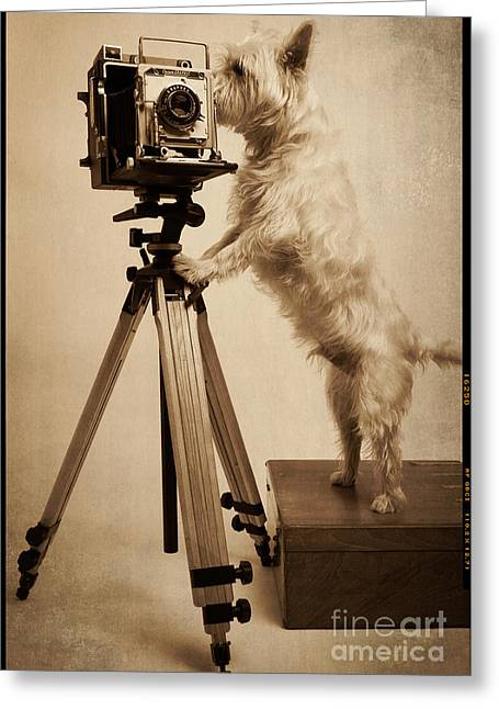 Working Dog Greeting Cards - Vintage Pho Dog Grapher Westie Greeting Card by Edward Fielding