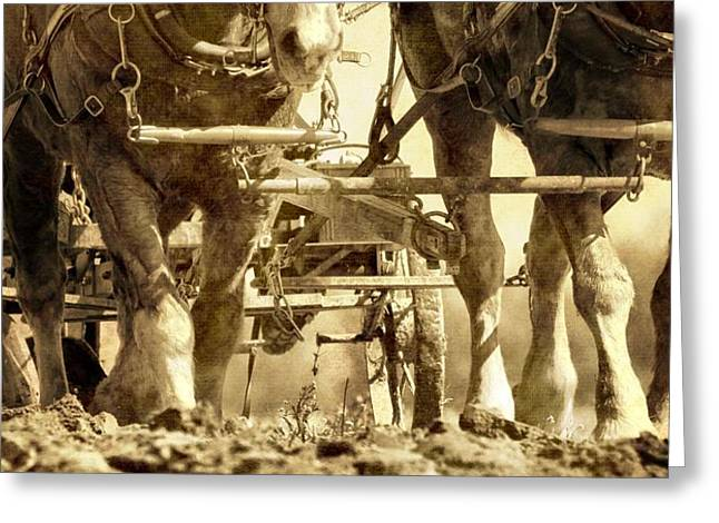 Sowing Greeting Cards - Vintage Plough Greeting Card by Dan Sproul