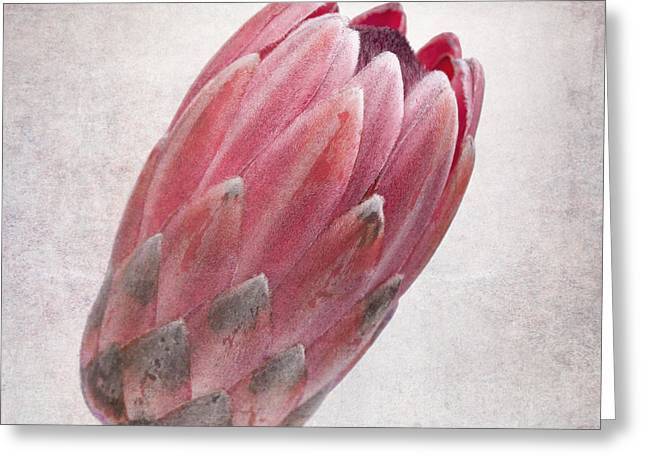 Proteas Greeting Cards - Vintage protea Greeting Card by Jane Rix