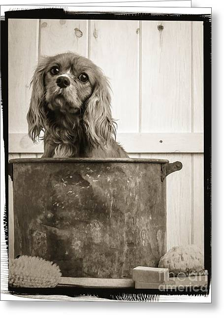 Dog Photographs Greeting Cards - Vintage Puppy Bath Greeting Card by Edward Fielding