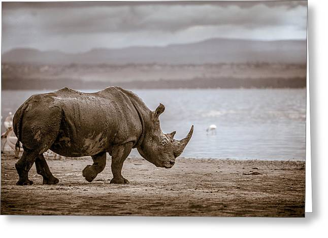 One Horned Rhino Greeting Cards - Vintage Rhino On The Shore Greeting Card by Mike Gaudaur