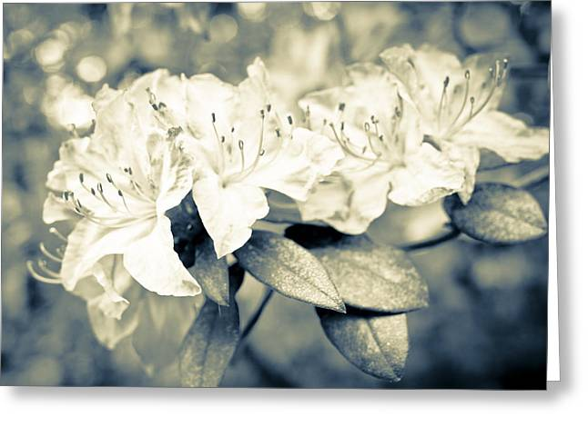 Rhodendron Greeting Cards - Vintage Rhododendron Spring Greeting Card by Priya Ghose