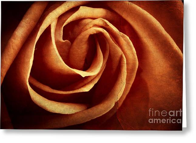 Rememberance Greeting Cards - Vintage rose Greeting Card by Mythja  Photography