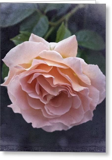 Vintage Rose No. 5 Greeting Card by Richard Cummings