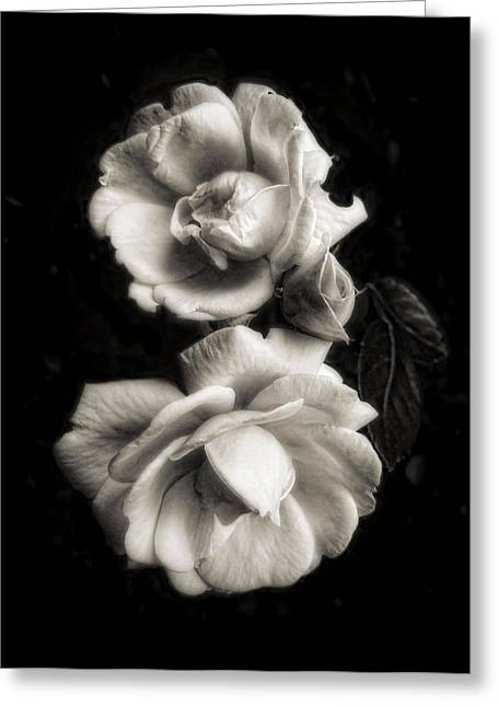 Duo Tone Greeting Cards - Vintage Roses in Antique Tones Greeting Card by Louise Kumpf