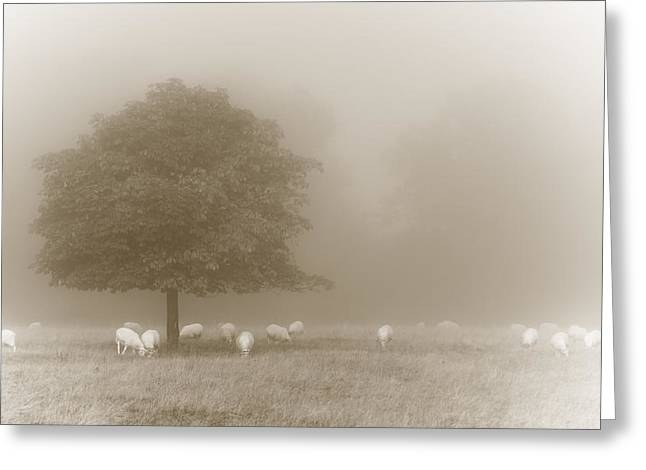 Clinton Greeting Cards - Vintage sheepscape Greeting Card by Chris Fletcher