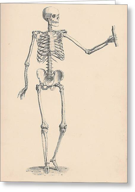 Horror Illustration Greeting Cards - Vintage Skeleton Greeting Card by Nomad Art And  Design