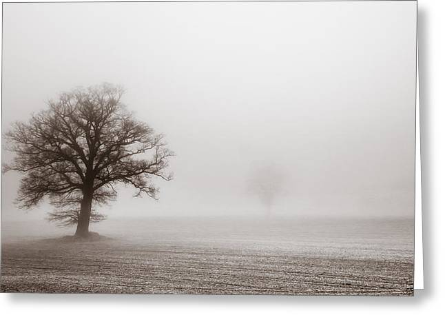 Monochrome Greeting Cards - Vintage treescape Greeting Card by Chris Fletcher