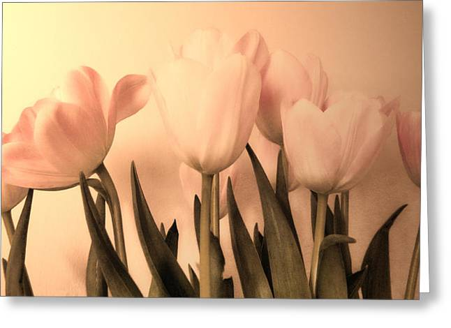 Pale Pink Greeting Cards - Vintage Tulips Greeting Card by Sharon Lisa Clarke