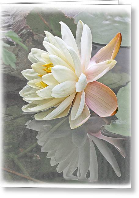White Waterlily Greeting Cards - Vintage Water Lily Reflections Greeting Card by Gill Billington