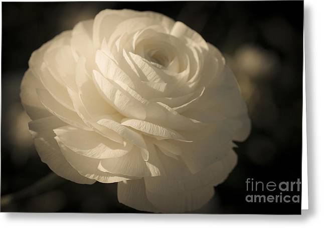 Ivory Flower Greeting Cards - Vintage White  Greeting Card by Ana V  Ramirez