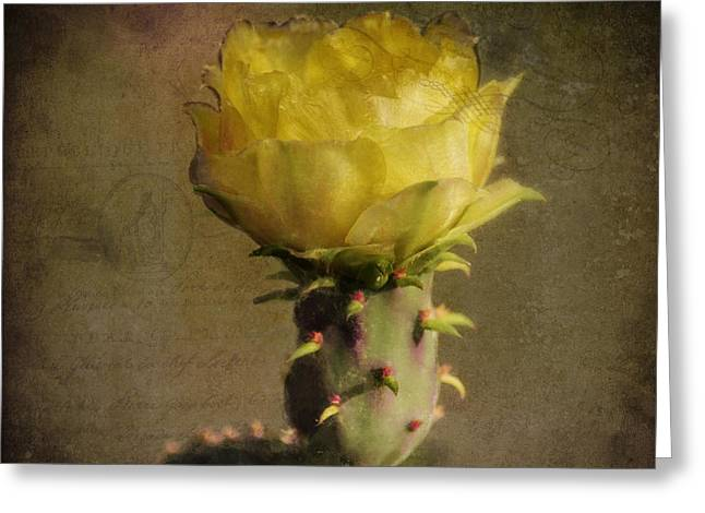 Square Format Greeting Cards - Vintage Yellow Cactus Greeting Card by Sandra Selle Rodriguez