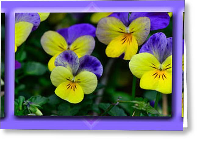 Floral Digital Art Greeting Cards - Viola X 3 Greeting Card by Larry Bishop
