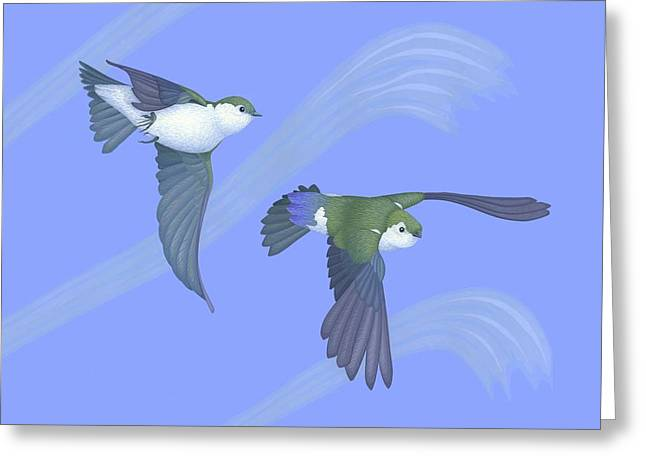 Flying Animal Paintings Greeting Cards - Violet-green Swallows Greeting Card by Nathan Marcy