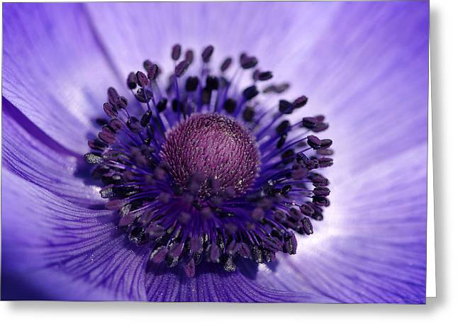 Haut-rhin Greeting Cards - Violet heart Greeting Card by Philippe Meisburger