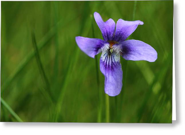 Violet Greeting Card by Heike Hultsch