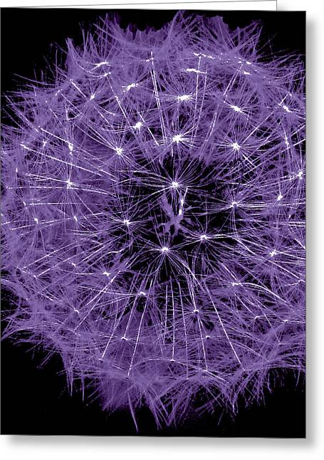 Vision Of Loveliness Greeting Cards - Violet  Puff Greeting Card by Debra     Vatalaro
