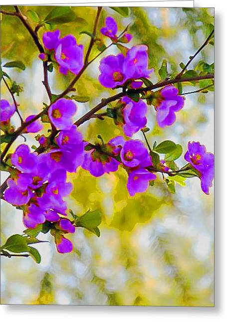 Stein Greeting Cards - Violet Quince Greeting Card by Curtis Stein