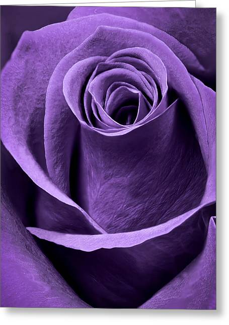 Interior Still Life Greeting Cards - Violet Rose Greeting Card by Adam Romanowicz