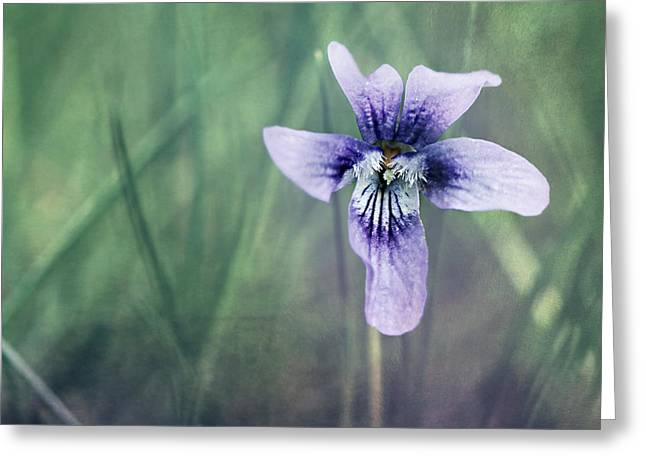 Violet Still Life Greeting Card by Heike Hultsch