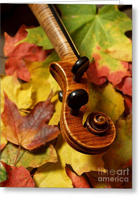Red Tiger Greeting Cards - Violin Scroll with Fall Maple Leaves Greeting Card by Anna Lisa Yoder