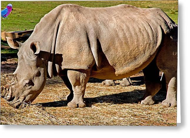 Rhinoceros Greeting Cards - VIP Cockatoo Visitor Gets Closer Look Greeting Card by Miroslava Jurcik