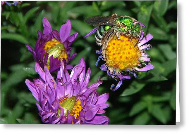 Peterson Nature Photography Greeting Cards - Virescent Metallic Green Bee Greeting Card by James Peterson