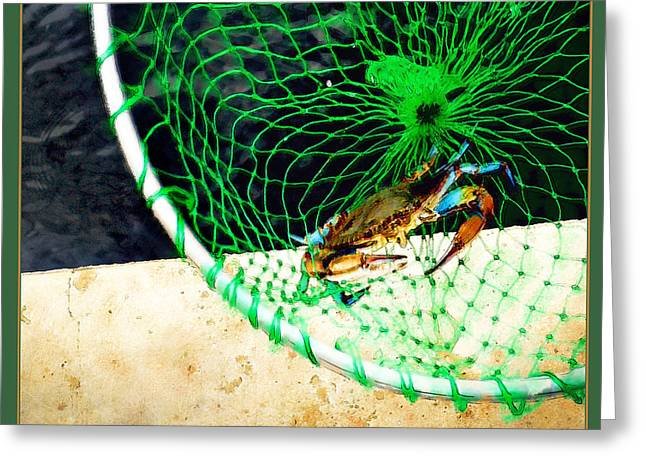 """""""crab Nets"""" Greeting Cards - Virginia Blue Crab Greeting Card by Margie Middleton"""
