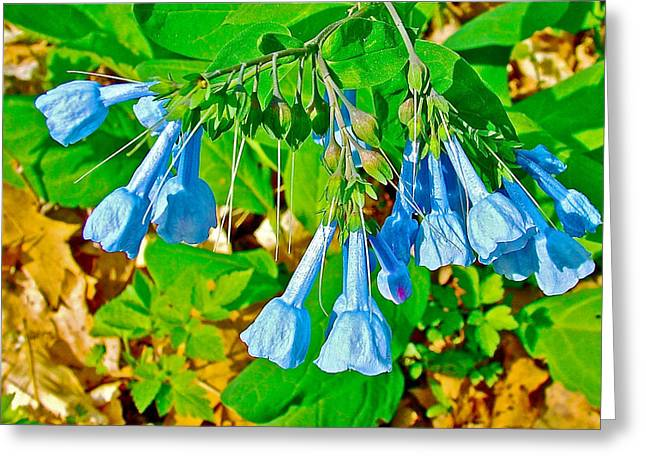 Virginia Bluebells At Sweetwater Branch Of Natchez Trace Parkway-tennessee  Greeting Card by Ruth Hager