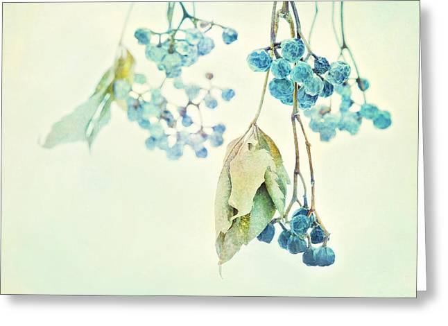 Winter Prints Greeting Cards - Virginia Creeper Berries Greeting Card by Theresa Tahara