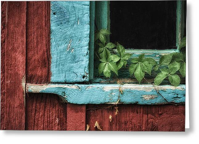 James Barber Greeting Cards - Virginia Creeper Greeting Card by James Barber