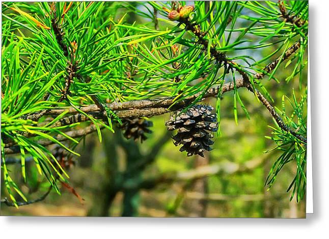 Virginia Pine Greeting Card by Chris Flees
