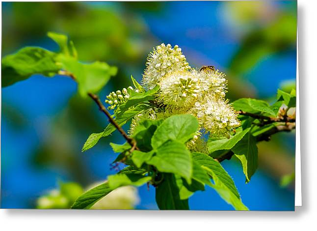 Orchards Prints Greeting Cards - Vision Of Spring - Featured 3 Greeting Card by Alexander Senin