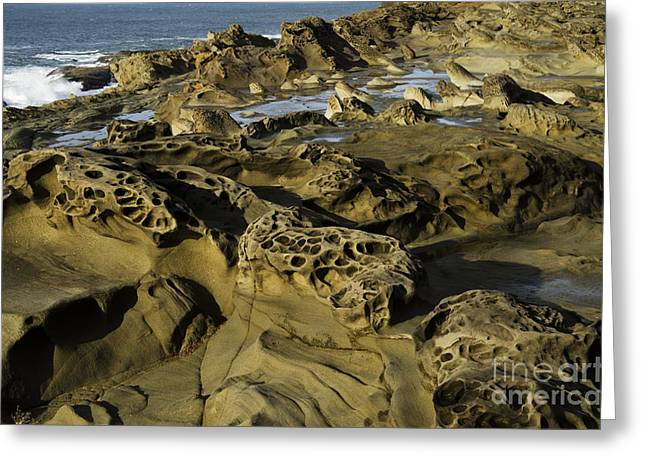 Surreal Landscape Photographs Greeting Cards - Visions Of Nature 4 Greeting Card by Bob Christopher