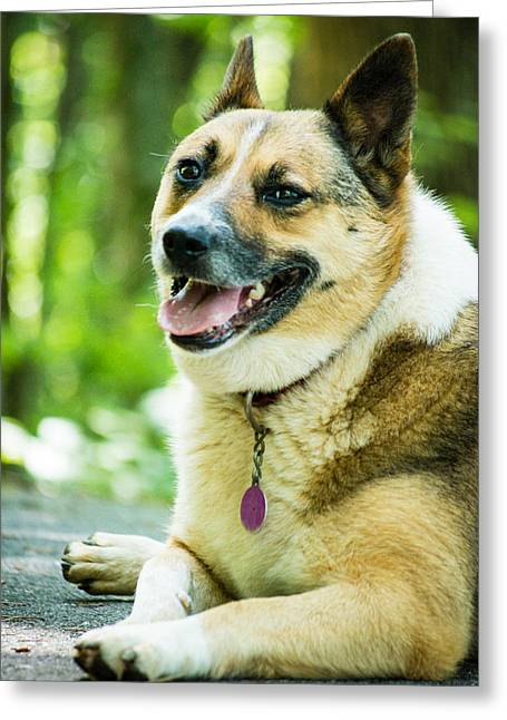 Corgies Greeting Cards - Visiting Dog Greeting Card by Gabrielle Harrison