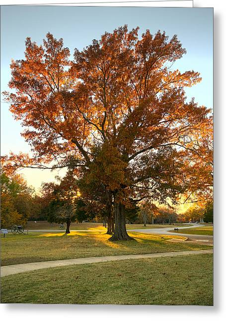 Landing Place Greeting Cards - Visitor Center Tree Greeting Card by Mike Talplacido