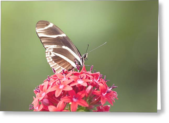 Kim Photographs Greeting Cards - Visitor in the Garden Greeting Card by Kim Hojnacki