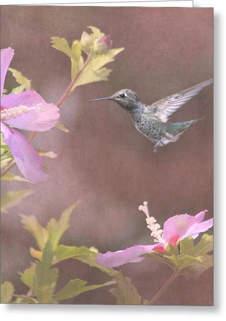 Hovering Greeting Cards - Visitor in the Rose of Sharon Greeting Card by Angie Vogel