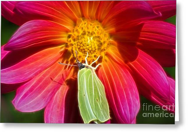 Butterfly Art Greeting Cards - Visitor Greeting Card by Lutz Baar