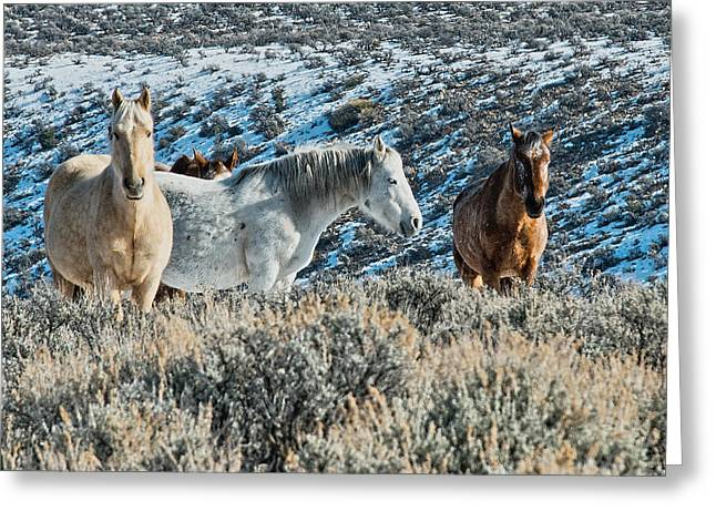 Taos Greeting Cards - Visitors from the Red Willows Greeting Card by Charles Muhle