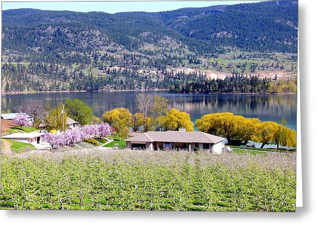 Willow Lake Greeting Cards - Vista 20 Greeting Card by Will Borden
